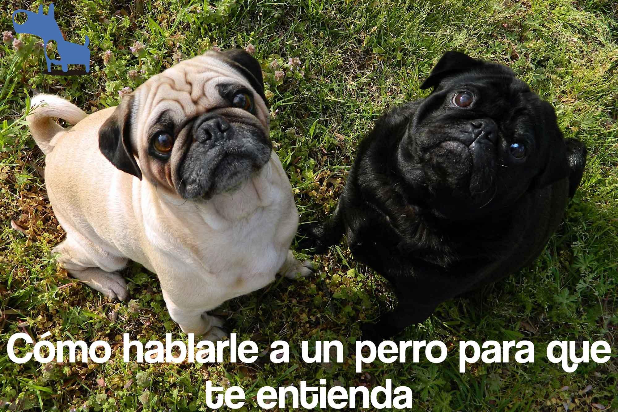 Como hablarle a tu perro para que te entienda