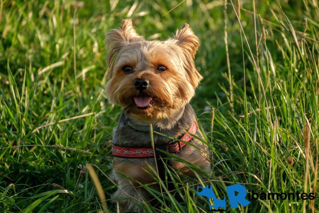Riesgos que puede padecer tu perro