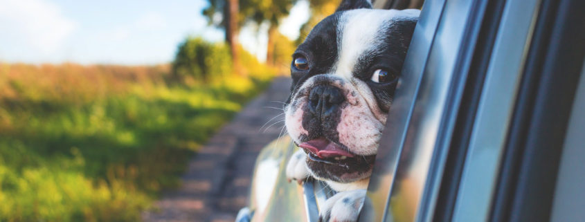 Como-medir-a tu-perro