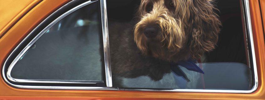 perro-se-maree-en-el-coche